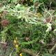 Tuin- en plantsoenafval